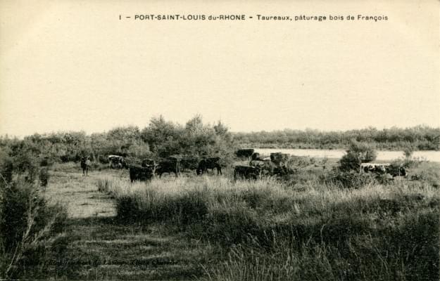 Cartes postales bouches du rh ne - Hotel francois port saint louis du rhone ...
